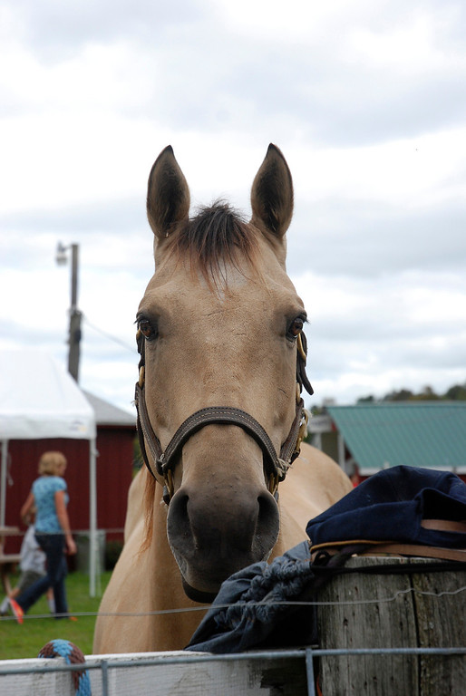 Description of . Kayla Rice/Reformer A horse at Gaines Farm in Guilford.