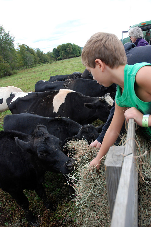 . Kayla Rice/Reformer Ben Kendall, 7, feeds cows while on a hayride at Gaines Farm in Guilford.