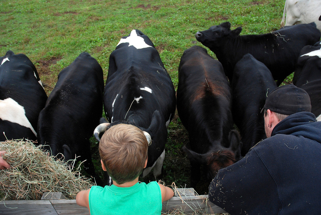. Kayla Rice/Reformer Ben Kendall, 7, feeds cows with his uncle, Chris Tidd of Westminster while on a hayride at Gaines Farm in Guilford.